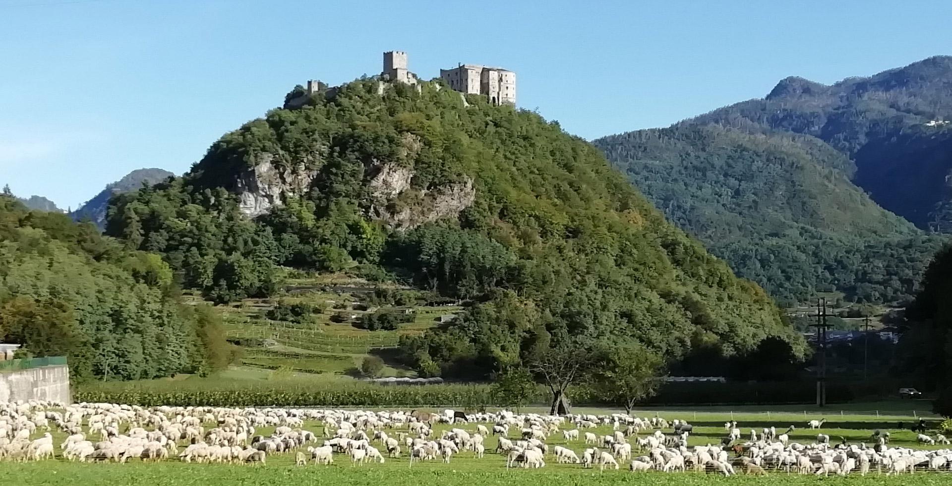 Castello-con-pecore-1--24-settembre-2019-2